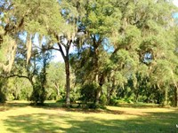 2 - 3 Acre Lots - Oak Hill In Citra : Citra : Marion County : Florida