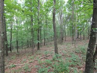 Plainfield Rd - 10 Acres : New Concord : Muskingum County : Ohio