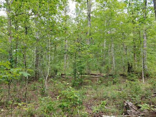 5.13+/-Acres With Beautiful Views : Sewanee : Marion County : Tennessee