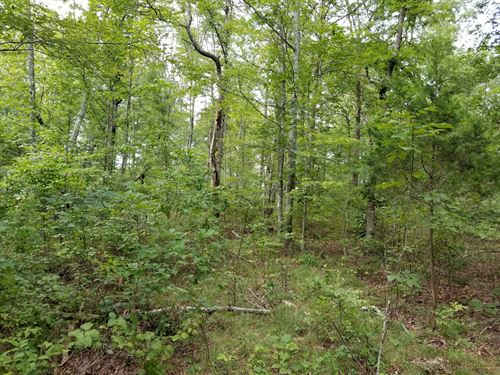 5.56+/-Acre Near Sewanee University : Sewanee : Marion County : Tennessee