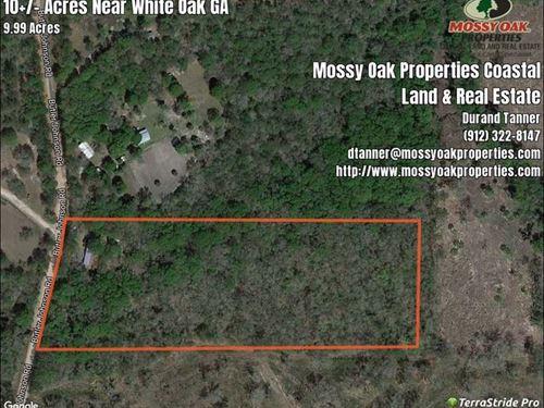 10+/- Acres With Mobile Home Camden : White Oak : Camden County : Georgia