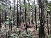 13.57 Acres Of Recreational Land : Starkville : Oktibbeha County : Mississippi