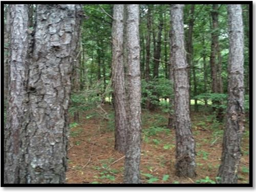 2 Acres In Lauderdale County : Lauderdale : Mississippi