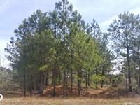 Wildcat Road Massive Lot : Harrells : Sampson County : North Carolina