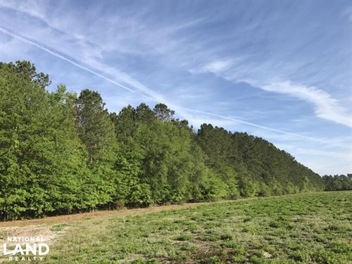 Hwy 462 Timber And Future Homesite : Ridgeland : Jasper County : South Carolina