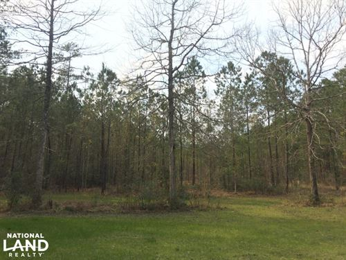 National Forest Recreation Land : Jamestown : Berkeley County : South Carolina