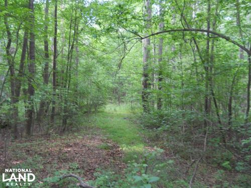 Wooded Residential Acreage : Pelzer : Greenville County : South Carolina