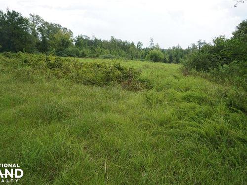 Sandy Fork Road Homesite Parcel 2 : Moundville : Hale County : Alabama