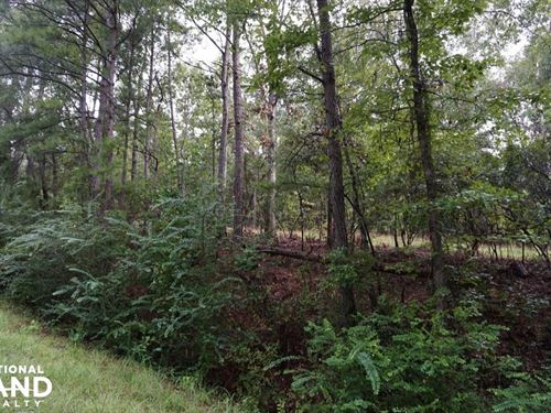 County Road 50 Homsite Parcel : Moundville : Hale County : Alabama