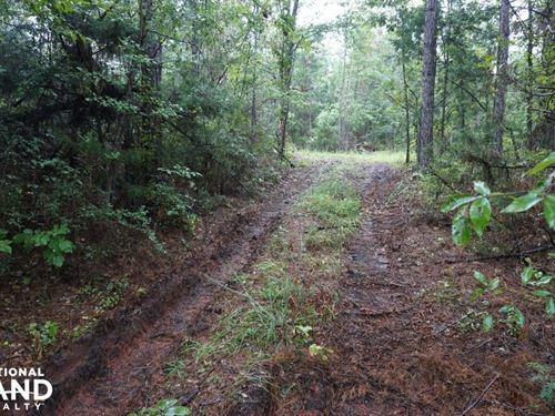 County Road 50 Homesite Parcel 1 : Moundville : Hale County : Alabama