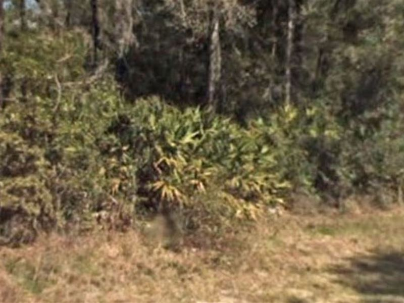 Citrus County Tax Property Search