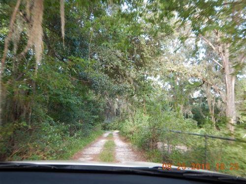 1.6 Acres In Gainesville, FL : Gainesville : Alachua County : Florida