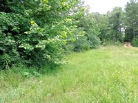 Wooded Tract, Unrestricted, Private : Olivehill : Hardin County : Tennessee
