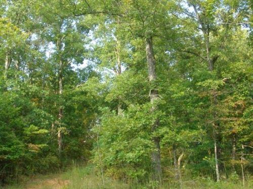Tennessee, Wayne County : Waynesboro : Wayne County : Tennessee