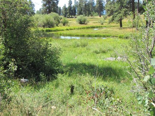 Up On Cripple Creek : Chiloquin : Klamath County : Oregon