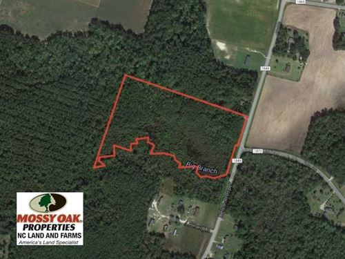 Reduced, 14 Acres of Hunting Land : Delco : Columbus County : North Carolina