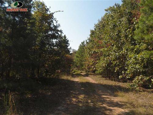 20 Acres in Van Buren County : Shirley : Van Buren County : Arkansas