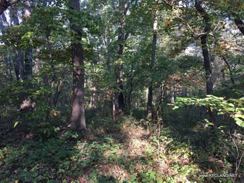 14 Ac - Wooded Tract For Rural Home : Versailles : Morgan County : Missouri