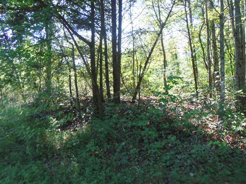1.3 Ac Private & Secluded, No Restr : Celina : Clay County : Tennessee