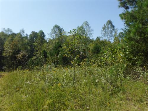 3 Ac Private & Secluded, No Restric : Celina : Clay County : Tennessee