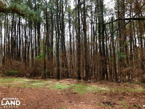 20 Wheeler Wooded Lot : Hernando : Desoto County : Mississippi
