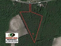 5.12 Acres of Hunting And Timber : Whiteville : Columbus County : North Carolina
