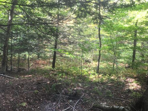 Near Nine State Forests : Annsville : Oneida County : New York
