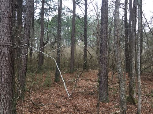 2.89 Acres Live Oak Road : Aragon : Polk County : Georgia