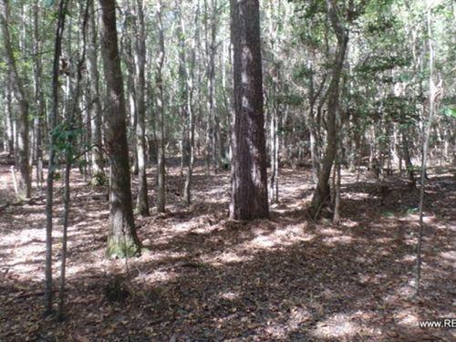 20 Ac - Timberland For Rural Home : Jasper : Texas