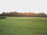 Small Acreage Half Wooded : Detroit : Lamar County : Texas