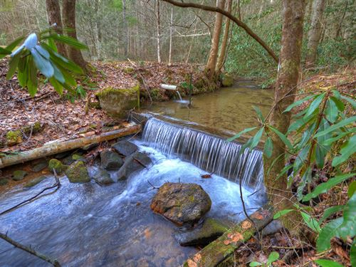 Mountain Trout Stream And Usnf : Blue Ridge : Fannin County : Georgia