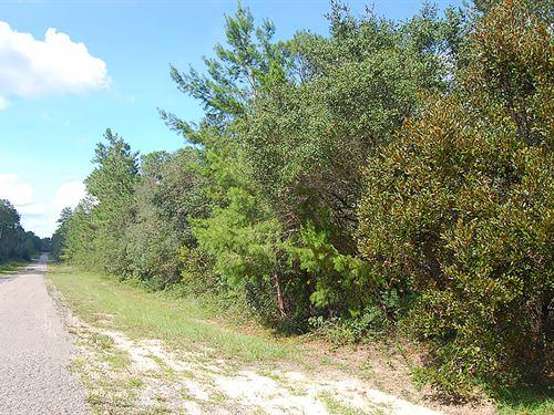 Over Half An Acre Corner Lot : Citrus Spring : Citrus County : Florida
