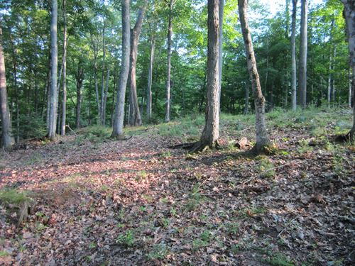Beautiful 1.56 Acre Wooded Parcel : Washington : Vilas County : Wisconsin