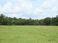 Hidden Meadows : Montgomery : Montgomery County : Texas