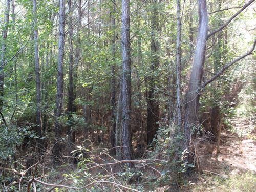 19.5 Acres In Jones County, Ms : Laurel : Jones County : Mississippi