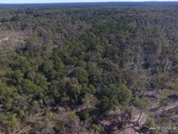 12 Ac - Wooded Tract For Home Site : Jasper : Jasper County : Texas