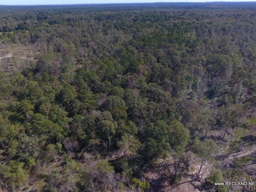 12 Ac - Wooded Tract For Home Site : Jasper : Texas