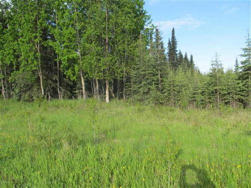 Lots of Trees on Borough Maintaine : Nikiski : Kenai Peninsula Borough : Alaska