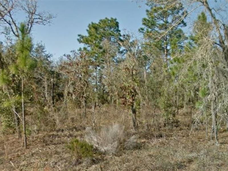 Levy County, Fl $20,000 Neg : Williston : Levy County : Florida