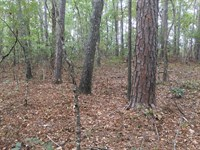 Pea Ridge Home Site And Hunting Lot : Montevallo : Shelby County : Alabama