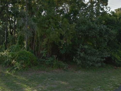 Hernando County, Fl $18,500 Neg : Spring Hill : Hernando County : Florida