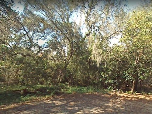 .31 Acres In Gainesville, FL : Gainesville : Alachua County : Florida