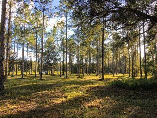 8.5 Acres With Pines And Oaks Land : Woodbine : Camden County : Georgia