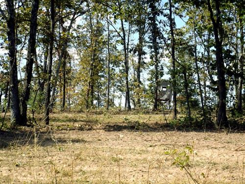 10 Acres, Off-Grid, Deer Blind : Brushy Knob : Douglas County : Missouri