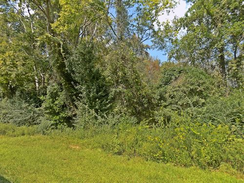 Affordable Wooded Acreage : Cheraw : Chesterfield County : South Carolina