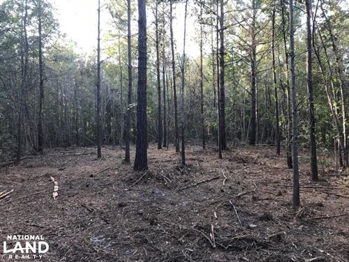 Bonneau Ridge 18 Acres : Bonneau : Berkeley County : South Carolina