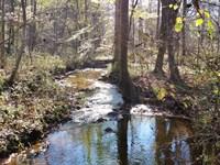 12+/- Acres National Forest : Ashland : Clay County : Alabama