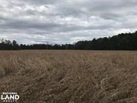 Salters Mini Farm : Salters : Williamsburg County : South Carolina