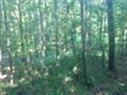 Lovely Wooded Land Bordering Hnf : Meadville : Franklin County : Mississippi