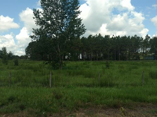 5 Green Acres Near The End Of Road : Dade City : Pasco County : Florida
